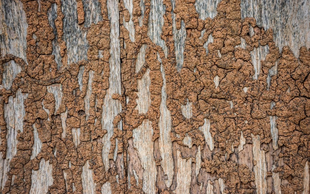 7 Signs of Termites in Your Home