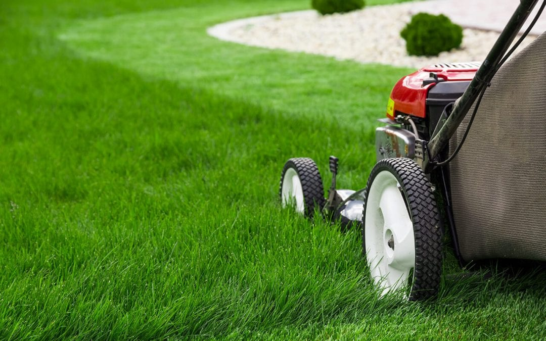 Maintaining a Healthy Lawn During the Summer
